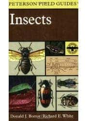 Peterson Insects